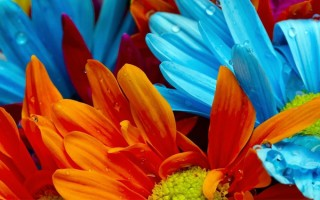Vasos que fazem inveja às flores  Vasos que fazem inveja às flores capadecorflores 320x200