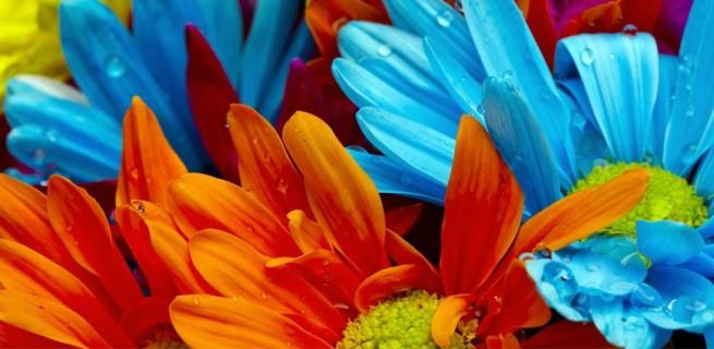 Vasos que fazem inveja às flores  Vasos que fazem inveja às flores capadecorflores 655x320