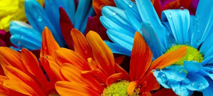 Vasos que fazem inveja às flores  Vasos que fazem inveja às flores capadecorflores 682x308